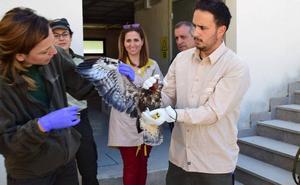 El Centro de Recuperación de Especies Amenazadas de Pinos Genil recuperó 339 animales el año pasado