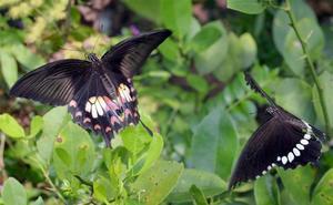 La curiosa adaptación de muchos animales a la urbanización