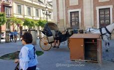 El cochero de caballos borracho y sin carné que ha indignado a toda Sevilla