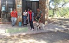 Vegas del Genil dará un curso 'antiladridos' gratuito a todos los perros del municipio