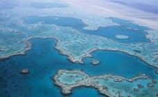 Demuestran la resistencia a los cambios ambientales del mayor arrecife del mundo