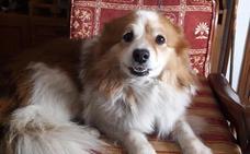 Varios interesados en adoptar a Jackie, el perro obligado a separarse de su dueño anciano