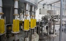 El aceite de oliva rompe con tres meses de caída de precios en origen y comienza a subir