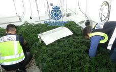 Una 'fábrica' de marihuana en Antonio Díaz