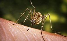 Descubre por qué los mosquitos solo te pican a ti