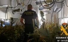 Desmantelados 78 suministros ilegales para el cultivo de marihuana en lo que va de año en Almería