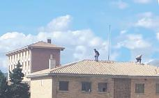 Un 'vuelco' de marihuana en Atarfe puede estar detrás de los dos tiroteos en Granada