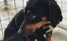 Fútbol sala para ayudar a SOS Perros de Adra