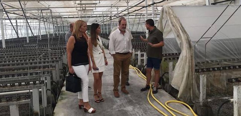 Semillero Los Crespos recibe una subvención de 137.000 euros para ampliar sus instalaciones en Adra