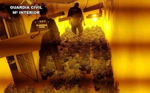 La 'Operación Lauxar' se salda con la incautación de 500 plantas de marihuana en Bayárcal y Paterna