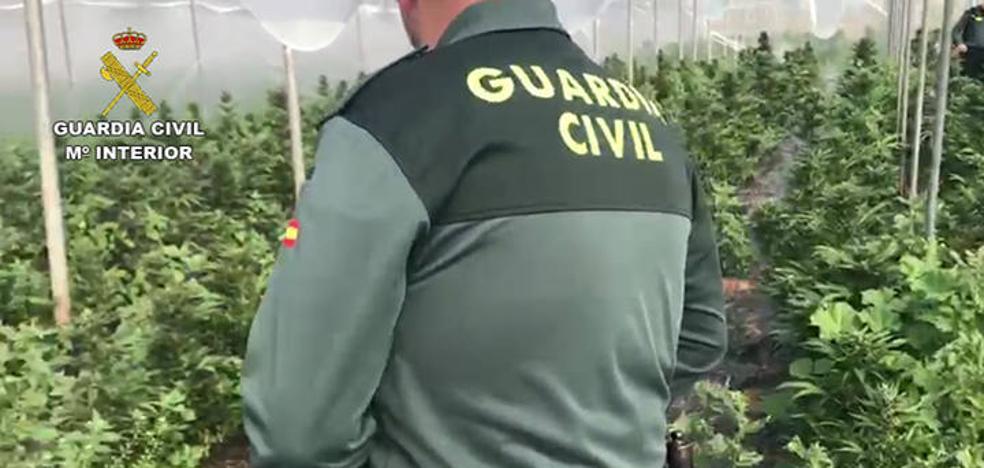 Localizan en Berja un invernadero donde se cultivaban 6.500 plantas de marihuana