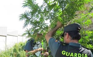 Cuatro detenidos en Adra tras el desmantelamiento de una plantación de marihuana