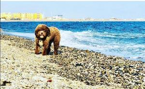 Adra oferta la primera playa para perros de la provincia