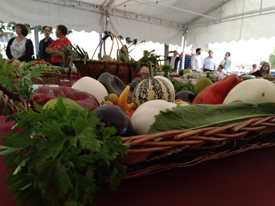 El XVI concurso de hortalizas en imágenes