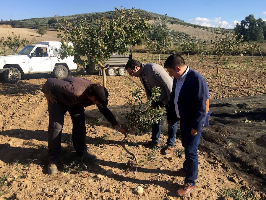Las ayudas para la plantación del pistacho superan los 200.000 euros