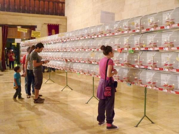 Más de 500 pájaros de 90 razas diferentes se reúnen estos días en Alcalá la Real