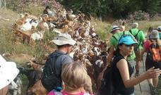 Cerca de un centenar de participantes coronan la 'Ruta del Collao' en Líjar