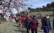 La Ruta de la Flor del Almendro en Albox cumple 10 este año con diversas actividades