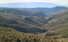 La Junta impulsa el sector empresarial forestal y el empleo verde a través del PGI de Filabres