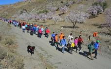 Albox acogerá la XI ruta de los Almendros en Flor