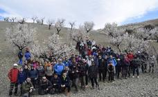 Albox acogió la XI Ruta 'Almendro en Flor' en El Saliente