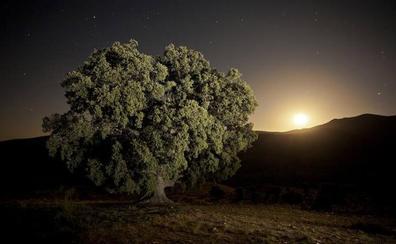 La encina de la Peana de Serón ya es monumento natural