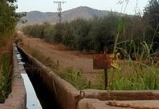 Situación límite para el riego en la Comunidad de Regantes del Rumblar