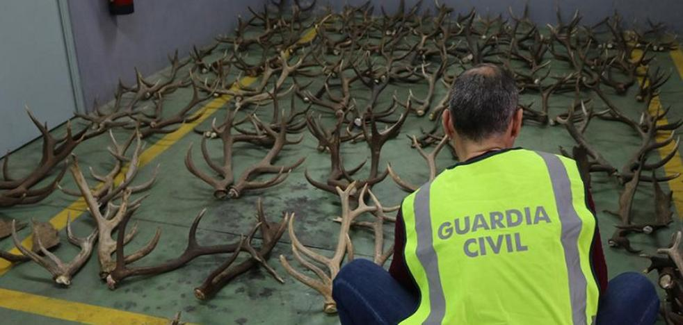 Cuatro detenidos por asaltar una casa en Andújar para robar trofeos de caza