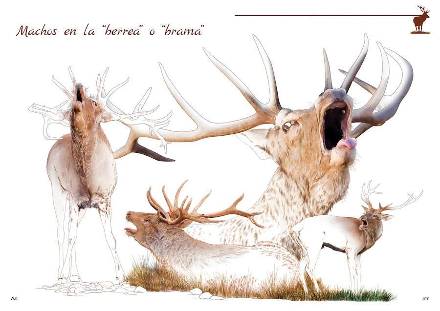 Una guía que aborda los ungulados de Andalucía, trata la diversidad de la serranía andujareña
