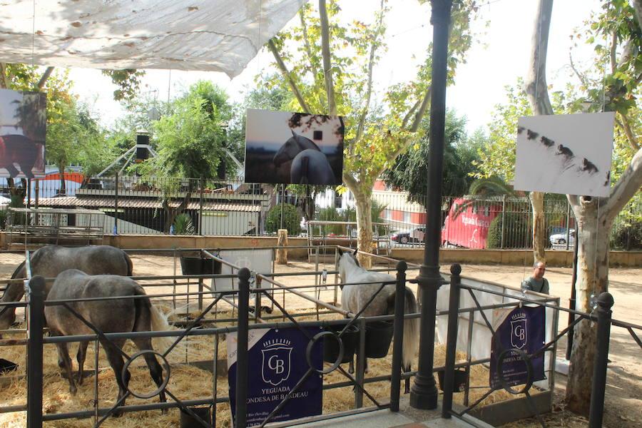 El PP pide la revitalización de Anducab y acusa al gobierno local de «dejadez»