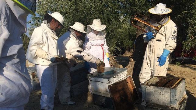 Malos tiempos para el sector de la miel