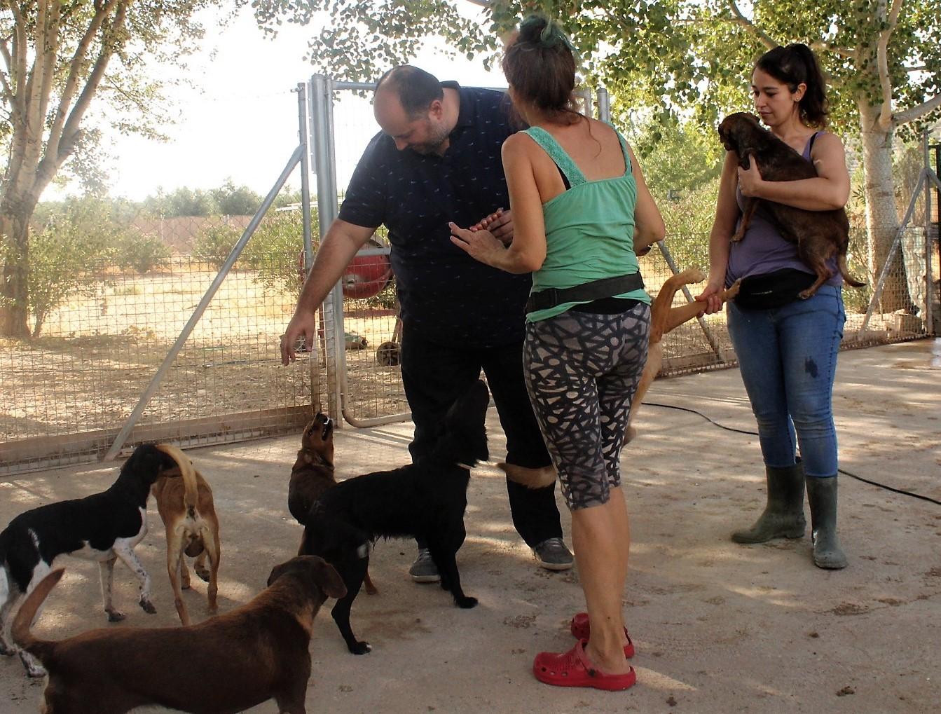 Las protectoras piden más concienciación social sobre el abandono animal