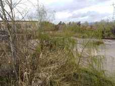 La ciudad pide a la CHG limpieza de arroyos y de la ribera