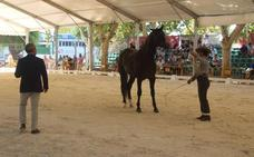 Referente del caballo de pura raza español