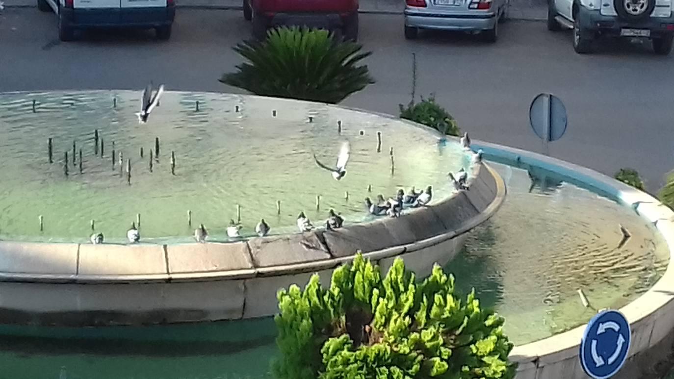 Un grupo de vecinos de la barriada Plaza de Toros piden que se alejen las palomas por la suciedad que generan