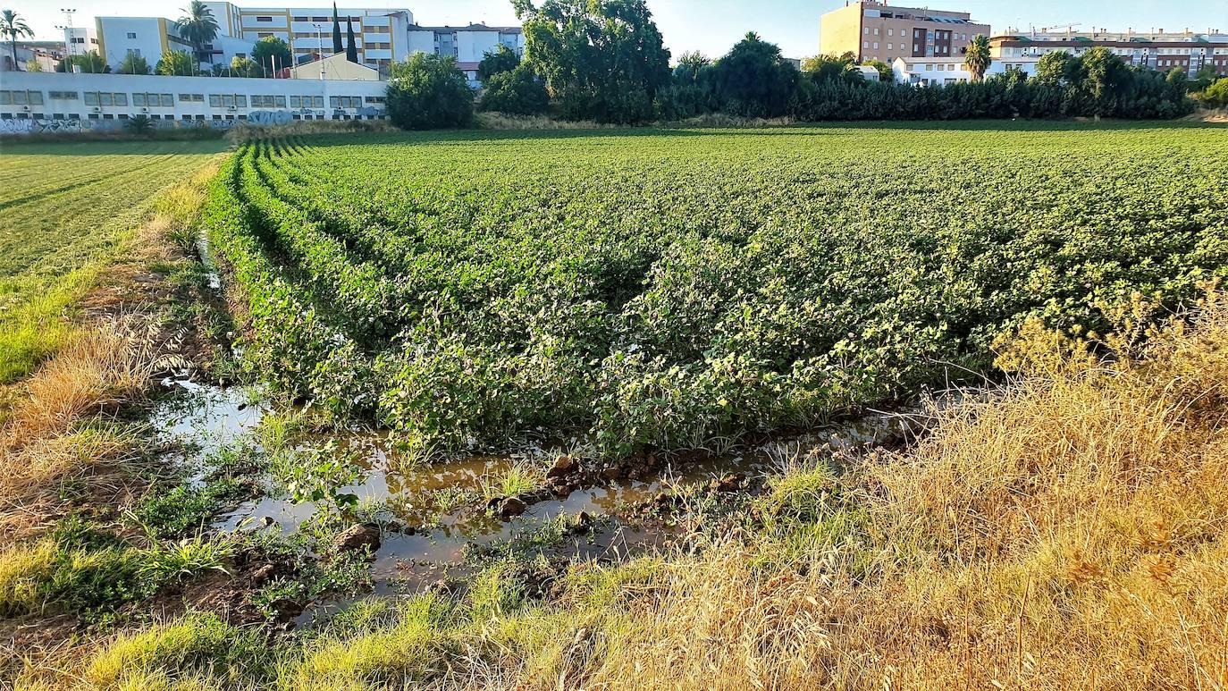La concienciación de los agricultores ante las restricciones, clave para salvar los próximos cultivos en la zona