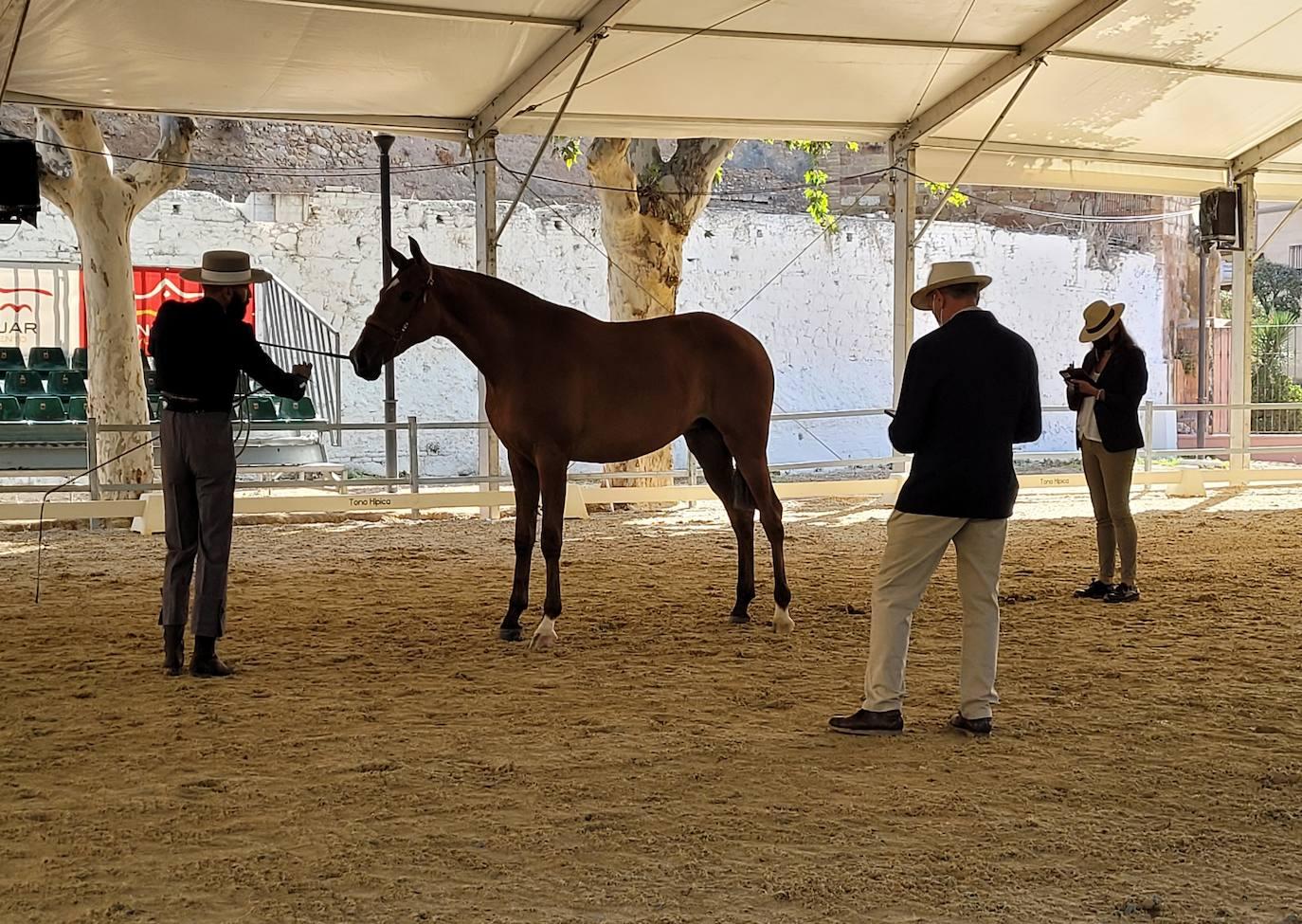 La estrecha relación de la ciudad con el caballo motiva el apoyo para el regreso de Anducab