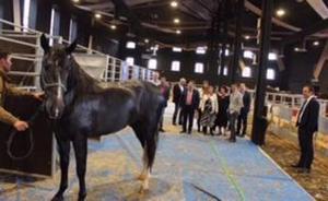 Armilla recibe la XIX edición de Concab con Andalucía como primera comunidad en número de caballos de pura raza española