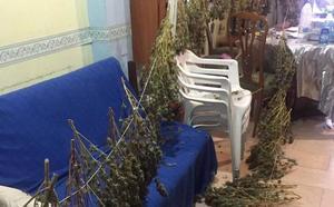 La Policía Local de Armilla acude a una vivienda por un incendio y encuentra más de 6 kilos de marihuana