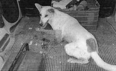 Dispara con una escopeta a un perro en Baza porque «molestaba» a sus gallinas