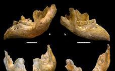 Huéscar 1: Uno de los últimos Mammuthus meridionalis de Europa