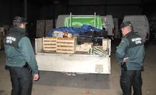 Denuncian a 78 personas por la recogida ilegal de 2,5 toneladas de setas en la Sierra de Baza