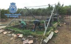 Desmantelan una plantación de cannabis en una finca de Baza