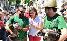 Medio Ambiente libera 53 quebrantahuesos del programa de reintroducción de la especie en Andalucía