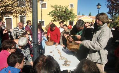 La Junta adjudicará el aprovechamiento de las setas a los Ayuntamientos del Parque Natural Sierra de Baza