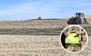 La Fiscalía investiga unas tareas de arado en Baza por amenazar a una mariposa «en extinción»