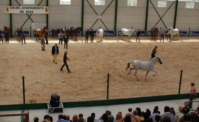 72 caballos de 30 ganaderías en el Campeonato de Caballos de Andalucía Oriental de Baza