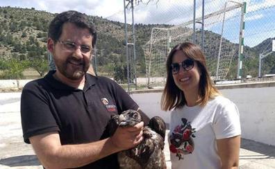 Rescatan en Albacete con síntomas de inanición a «Verdi» una quebrantahuesos liberada en mayo en Castril