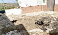 Freila evalúa los daños ocasionados por las tormentas de la pasada semana