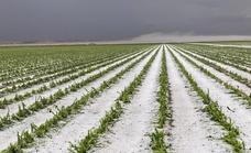 Una tormenta de agua y granizo arrasa las cosechas en el Campo de la Puebla